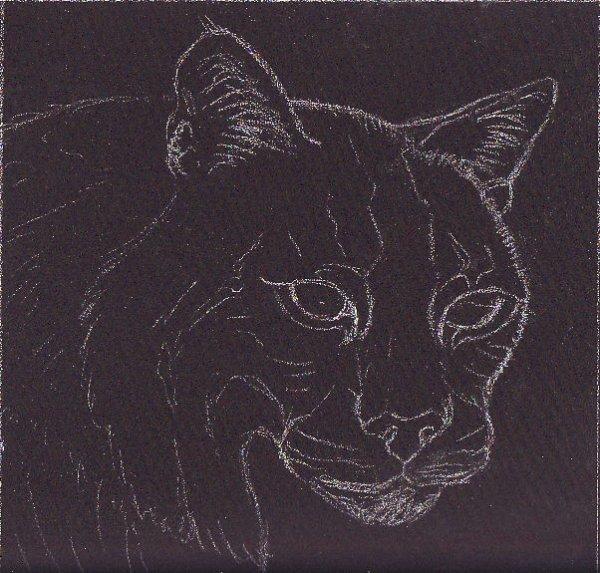 bobcat sketch, feline, big cat, wild cat, drawing