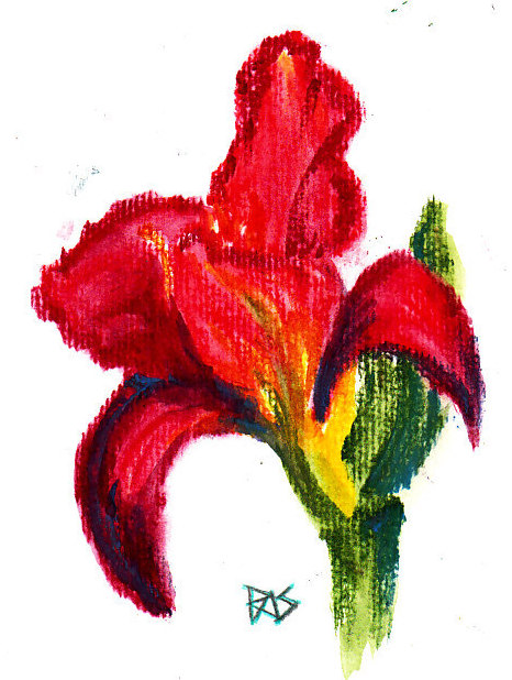 A Red Lily drawn dry on wet paper using Daniel Smith watercolor sticks, by Robert A. Sloan