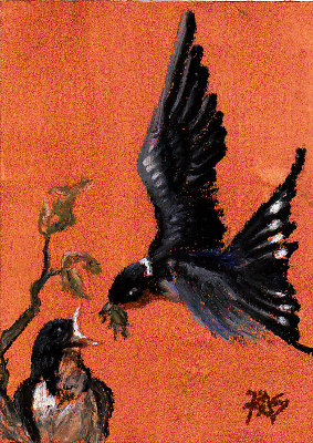 Barn Swallow by Robert A. Sloan