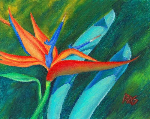 Oil pastel painting of a Bird of Paradise flower on dark green background by Robert  A. Sloan.
