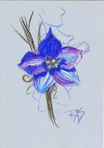 Blue flower study in Louvre oil pastels by Robert A. Sloan.