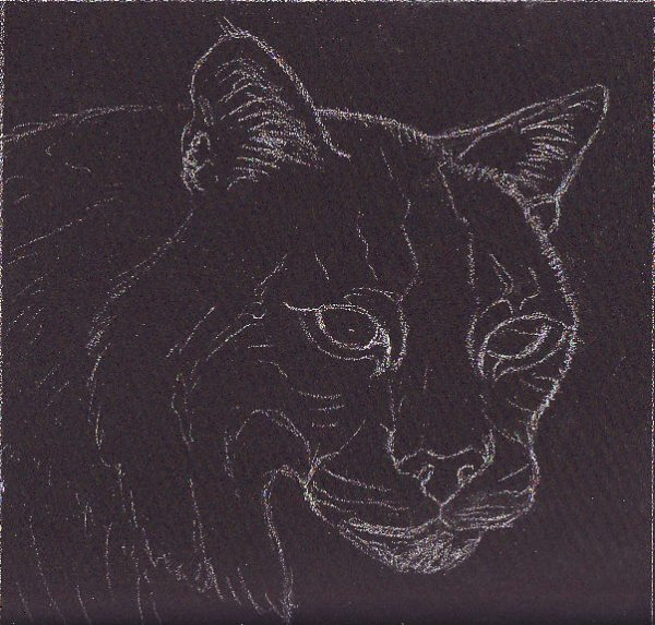 Bobcat sketch in white on Aubergine Colourfix sanded pastel paper.