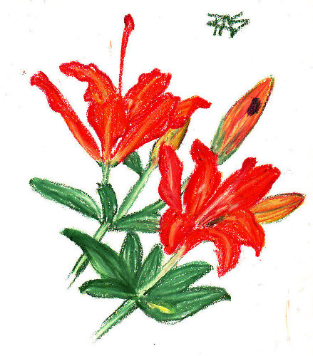 Day Lilies -- life sketch by Robert A. Sloan