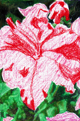Red used to block in shading on pink petunia