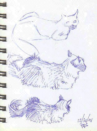 Three gesture sketches of a longhair Siamese cat laying down, each one a bit more detailed.