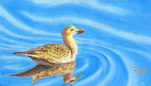 Oil pastel painting of a brown seabird with reflections on sky blue rippled water painted by Robert  A. Sloan from a photo by Wendell Dennis.