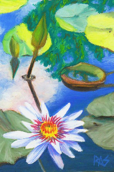 White water lily and green lily pads and bud on blue-green water with blue sky, pale clouds and green foliage reflections.