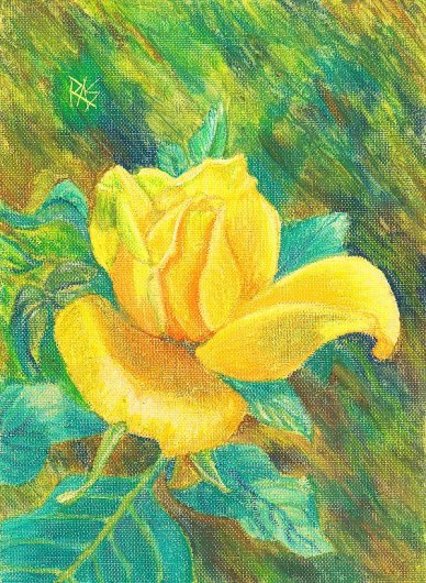 Yellow Rose painting in oil pastels with thinner wash on canvas paper by Robert Sloan.