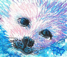 Baby seal in oil pastels, pink sunlit fur, blue-violet shadowed fur, black eyes and nose with blue highlights and black whiskers done in Walnut Hollow oil pencils by Robert Sloan.