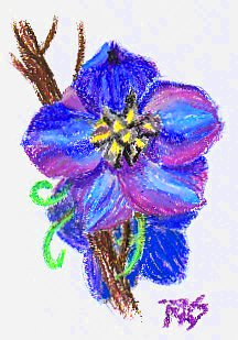 <b>Blue Flower Study</b> in Niji oil pastel on ProArt sketchbook paper by Robert A. Sloan.