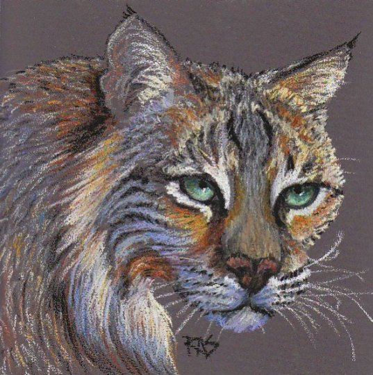 Bobcat by Robert A. Sloan