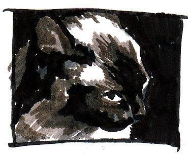 Cat Notan Six, extreme close up portrait notan.