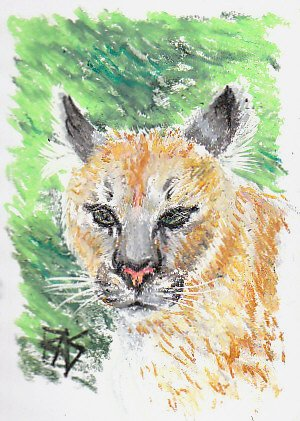 Cougar sketch looking at viewer with mottled green background suggesting foliage, drawn in Reeves oil pastels.