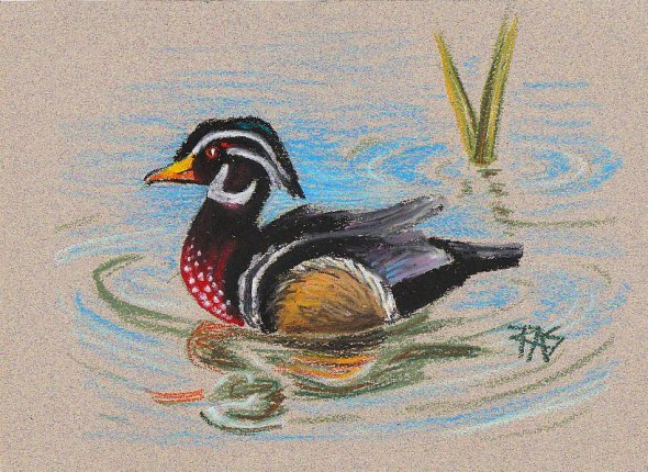 Duck painted in Cray Pas Expressionists with black and white head, red speckled chest, reflections in water and green reeds, by Robert Sloan from Walter Foster #152.