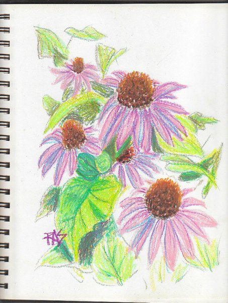 Pale purple Echinacea flowers with big dark brown centers in bright green foliage, sketched loosely by Robert Sloan using Holbein Academic oil pastels